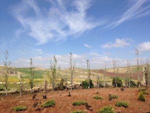 Adel Al Rasheed - View from my home towards Syria