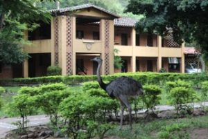Bruno, the ostrich that lives in the Cerrito school. Behind, the building were offices and apartments of collaborators are located.